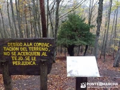 Senderismo Hayedo de Tejera Negra - Club Turismo Activo Madrid